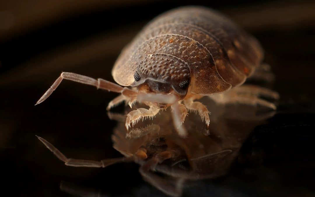 Creepy Crawlies: Eye Infestations